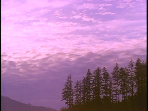 Clouds float across the sky over an evergreen forest Stock Video Footage