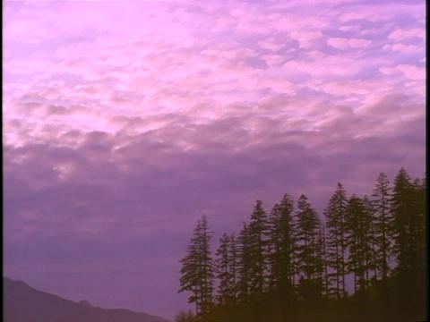 Clouds float across the sky over an evergreen forest Footage