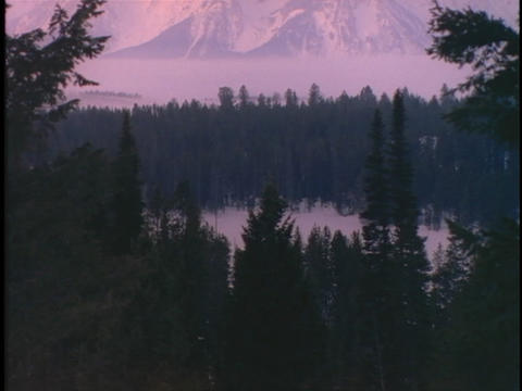 The Grand Tetons rise high above a wooded valley Stock Video Footage