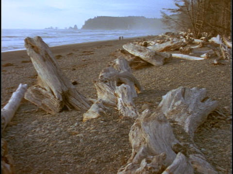 Driftwood lines a beach along the Oregon coast Stock Video Footage