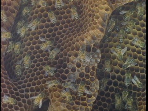 Bees work in their hive Stock Video Footage