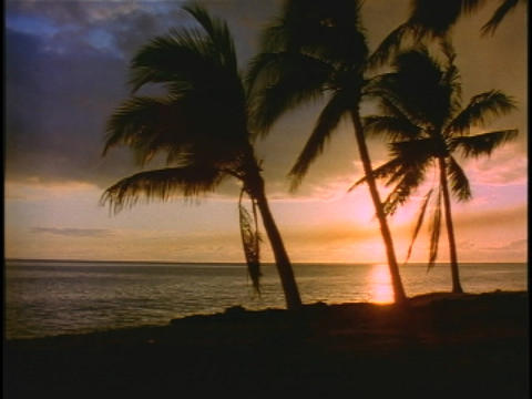 Palm trees sway in the breeze on the shore Stock Video Footage