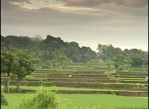 People work in a tropical field Stock Video Footage