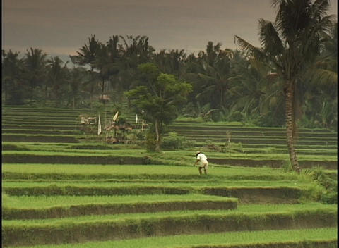 A farmer digs and pounds with his foot in a tropical field Footage
