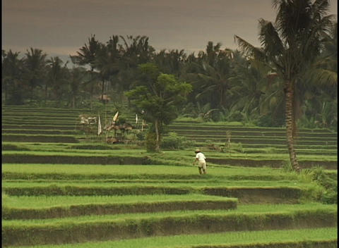 A farmer digs and pounds with his foot in a tropical field Stock Video Footage