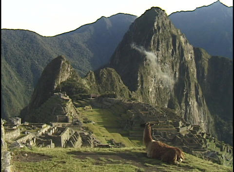 A llama rests on a mountain peak overlooking the ancient city of Machu Picchu Footage