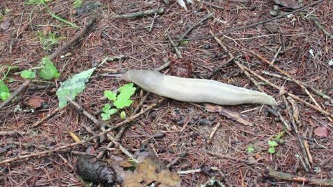 close-up big slug Footage