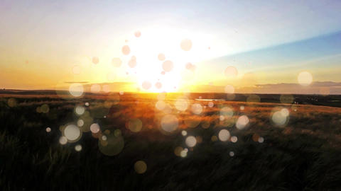 Bokeh and sunset in a field Animation