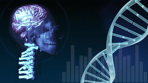 Animation of human head and DNA helix Animation