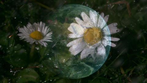 Common chickweed under heavy rain Animation