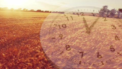 Wheat fields with an analogue clock Animation