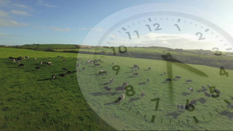 Clock and a field with cows Animation
