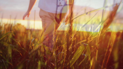 Man walking across a wheat field on a sunset Animation