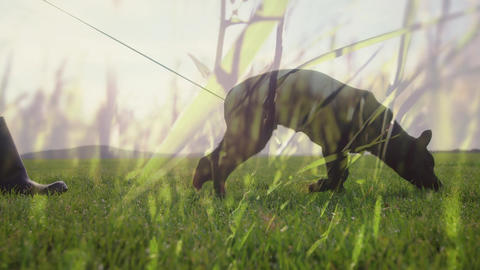 Person walking a dog on grass field Animation