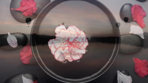 Flower floating in a bowl of water Animation