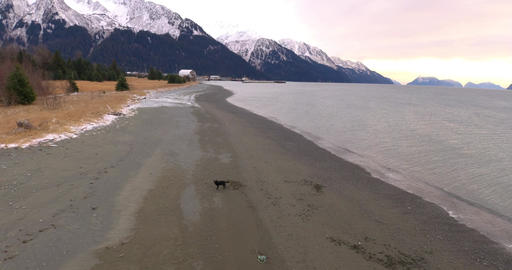 Dog playing on the beach Live Action