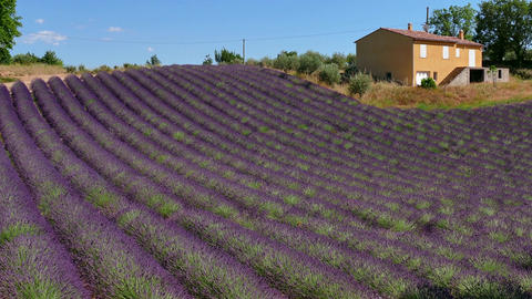 French Countryside House Near Lavender Field In Provence Southern France Footage