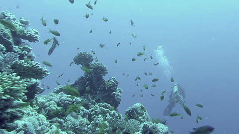 Underwater coral reef landscape with colourful fish Footage