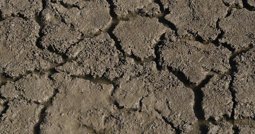 Drought in the Marshes of Camargue, in the South East of France, Real Time 4K Live Action
