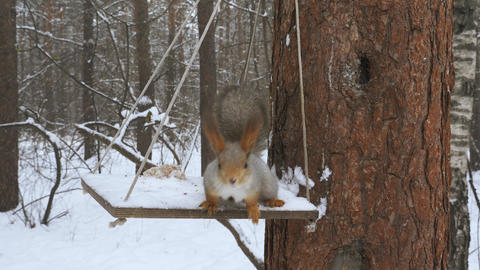 Squirrels climb trees in the forest 003 Live Action