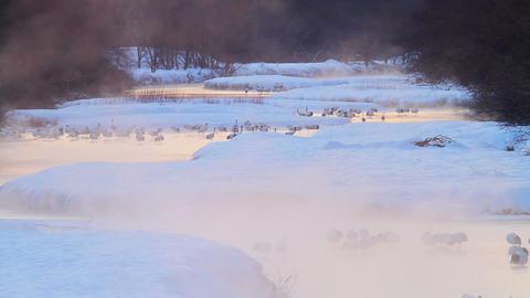 Snowy River In Hokkaido Japan ビデオ