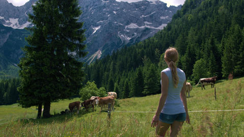 Young woman approaching cows on pasture in Alpine valley Footage