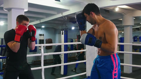 Box training - two man having a training fight on the boxing ring Live Action