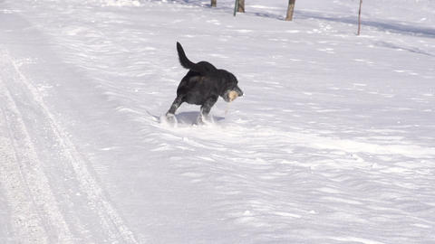 Dog Fetching In Snow Footage