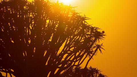 Africa Sunrise Time-Lapse Trees Dawn Footage