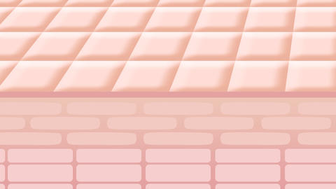 Skin0007 Animation