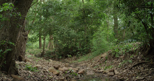 Green Forest. Mountain river flowing near the green forest Live Action