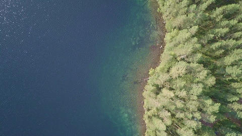 Shoreline of clear-watered forest lake in Finland Live Action