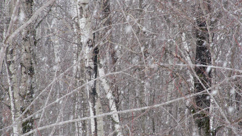 Heavy Snow In The Woods Footage