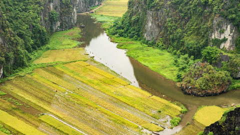 Rice Paddies In Vietnam Footage