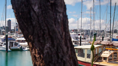 Auckland Marina Time Lapse ビデオ