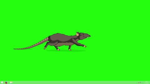 Brown rat sneaking animation Chroma Key Animation