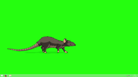 The brown rat comes, sniffs and leaves animation Chroma Key Animation