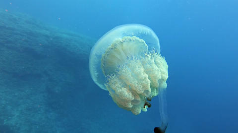 Underwater jellyfish swimming close to the sea surface - Scuba diving in Majorca Spain Live Action
