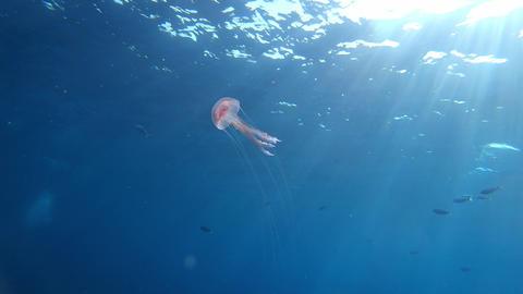 Alone jellyfish undersea - Scuba diving in Majorca Live Action