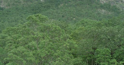 Mountains tropical vegetation amazing landscapes misty background huge big mountain background Live Action
