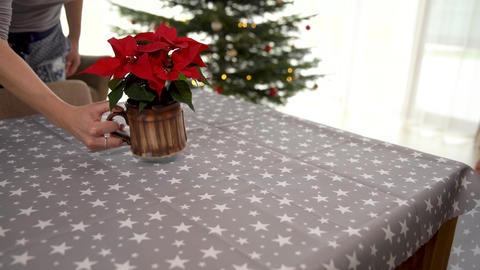 festive table setting for Christmas, table cloth and Christmas stars Live Action
