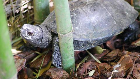 Florida Turtle Footage