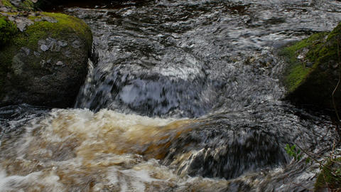 forest stream close to Live Action