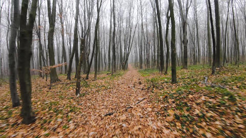 FPV drone flight quickly and maneuverable through an autumn forest in foggy Live Action