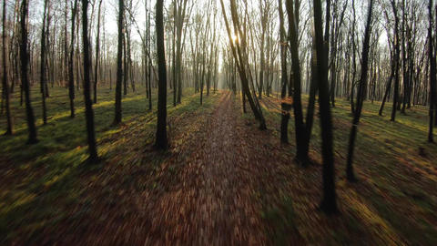 FPV drone flight quickly and maneuverable through an autumn forest at sunset Live Action