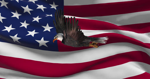 USA flag with bald eagle animation - national patriotic colorful symbol Live Action