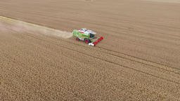 Flight over harvester wheat rye field aerial 4k video. Rural combine crops grain Footage