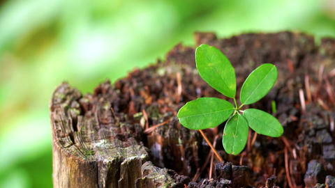 Leaves of the new plant that grows in the stump (Image macro of life) ビデオ