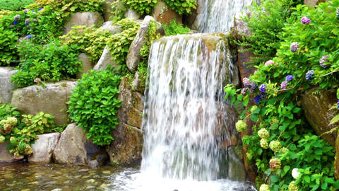 Waterfall and hydrangea (nature, general-purpose, plants, bread) Footage
