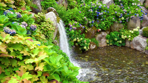 Waterfall and hydrangea (nature, general-purpose vegetable) Footage
